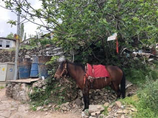 Not sure why this horse was here; I never saw them elsewhere.